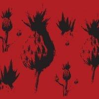 Red Thisle